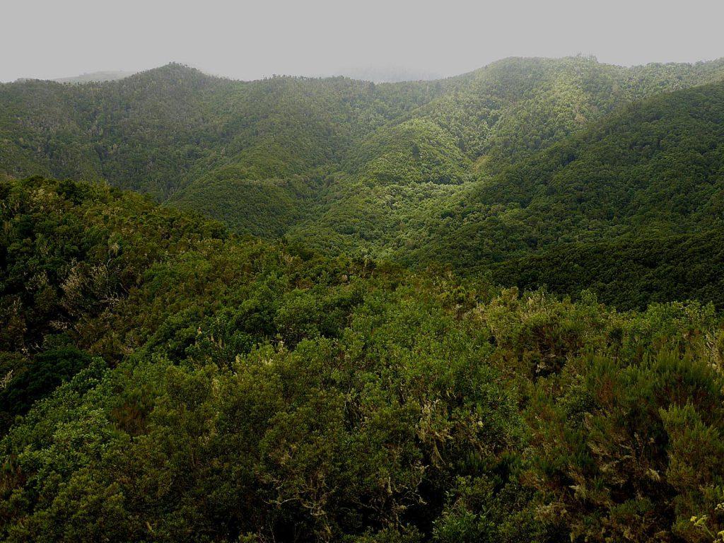 Monte del Agua - Los Silos